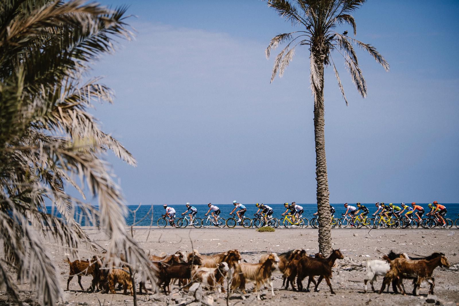 Tour of Oman: Norwegian sprinter takes the lead in stage one