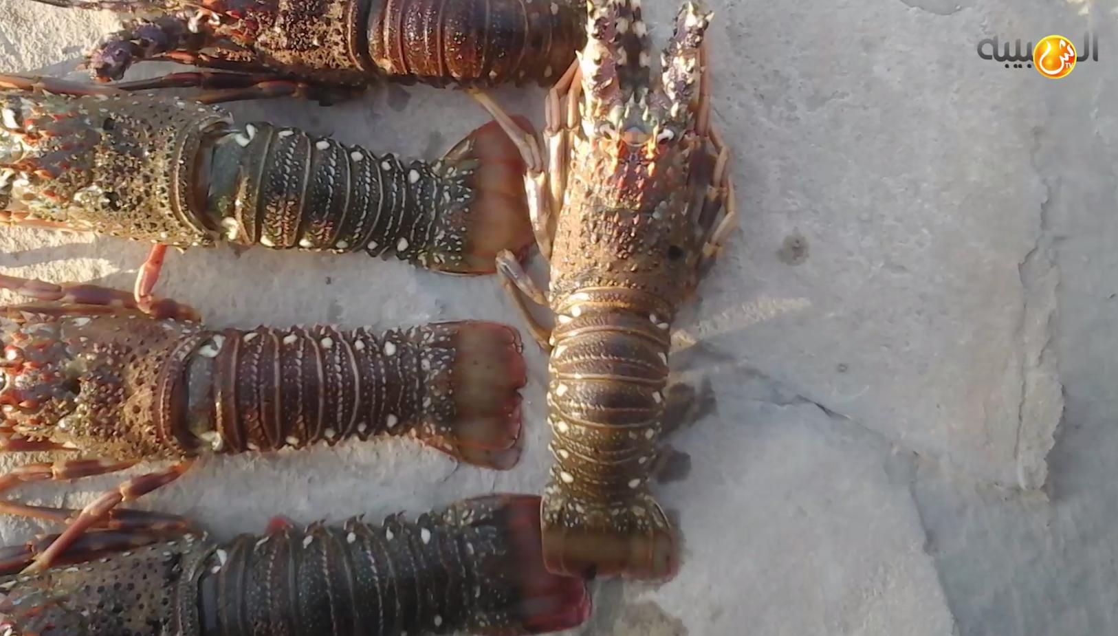 """فيديو.. تعرف على """"الشارخة"""" إحدى كنوز سلطنة عمان البحرية"""