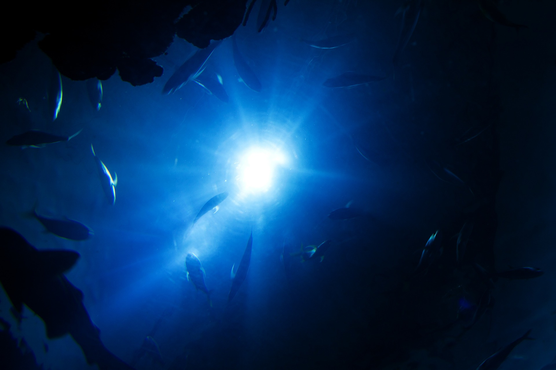 Diver breaks record for deepest dive