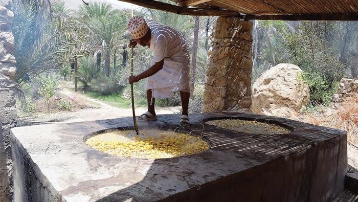 Dates harvest season in Oman gets underway