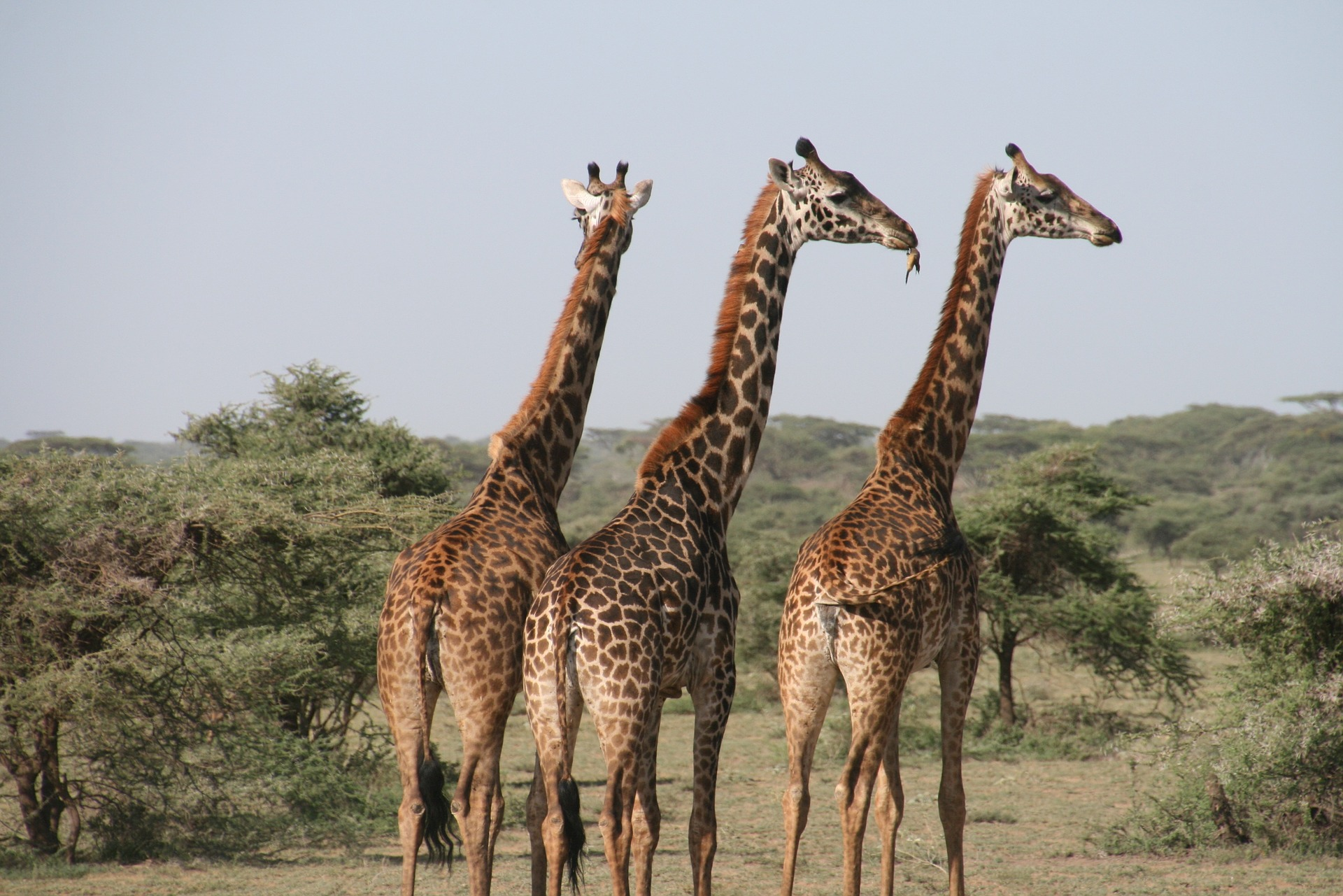 Rise in tourism in Tanzania