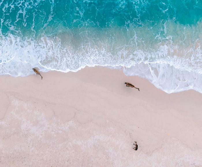 Visit Al Fizayah beach in Dhofar