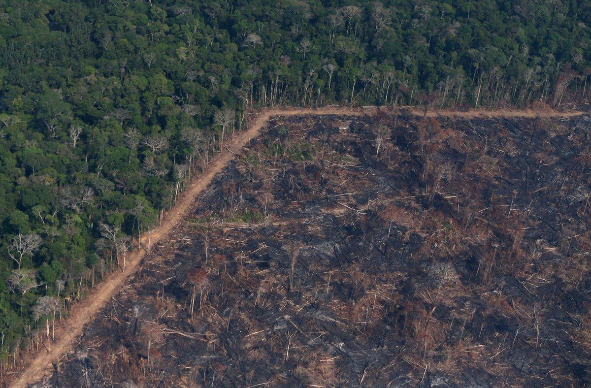 Criminal networks causing Amazon deforestation: HRW report