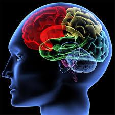 """دراسة أمريكية : الدماغ """"يرمم"""" خلله بنفسه أثناء النوم"""