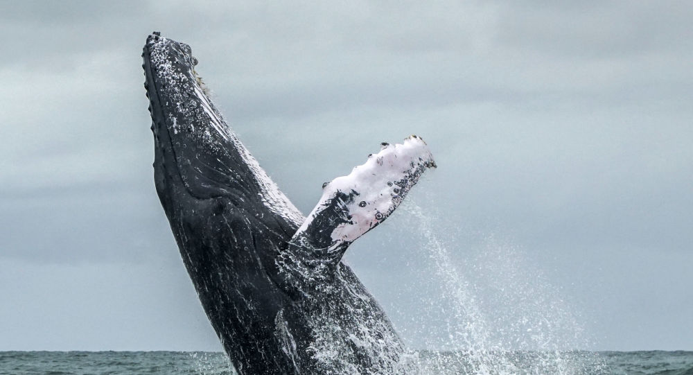 """حقائق مذهلة عن """"الحوت الأزرق"""" أضخم كائن على ظهر الأرض"""