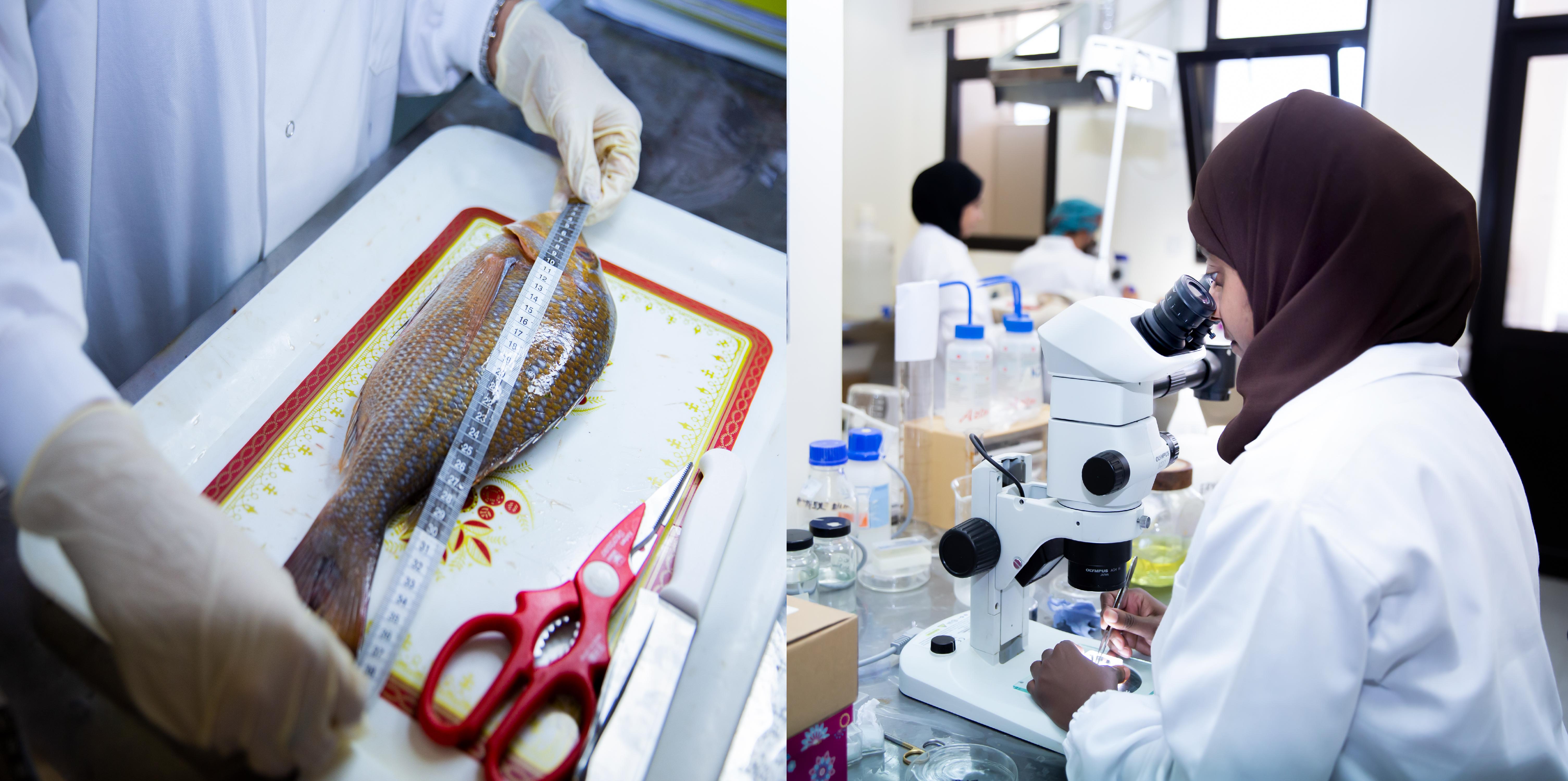 """تواصل إجراء مشروع الدراسة حول """"الطفيليات المائية المرتبطة بسلامة الأغذية البحرية"""""""
