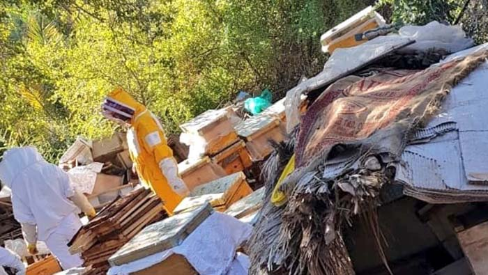 58 beehives seized by Oman's Ministry of Agriculture and Fisheries