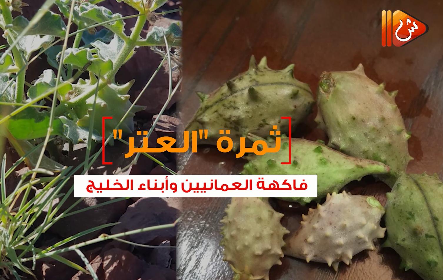 """بالفيديو.. شاهد ثمرة """"العتر"""" .. فاكهة العمانيين وأبناء الخليج"""