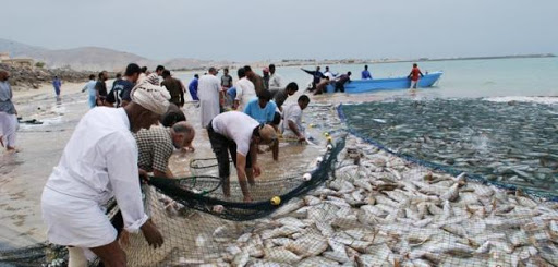 زيادة في إجمالي الأسماك المنزلة بالصيد الحرفي بالسلطنة