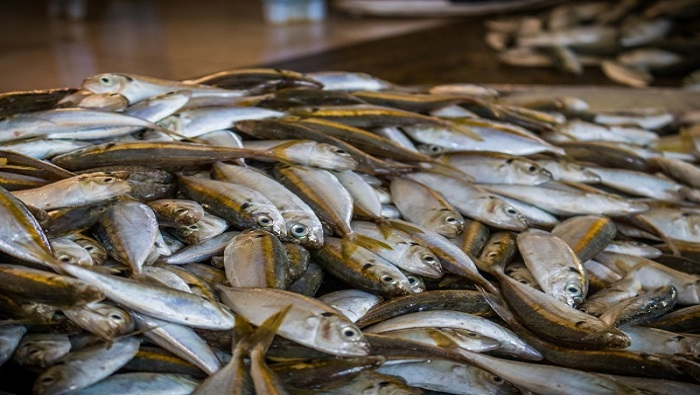 No shortage of fish products in Oman: Ministry
