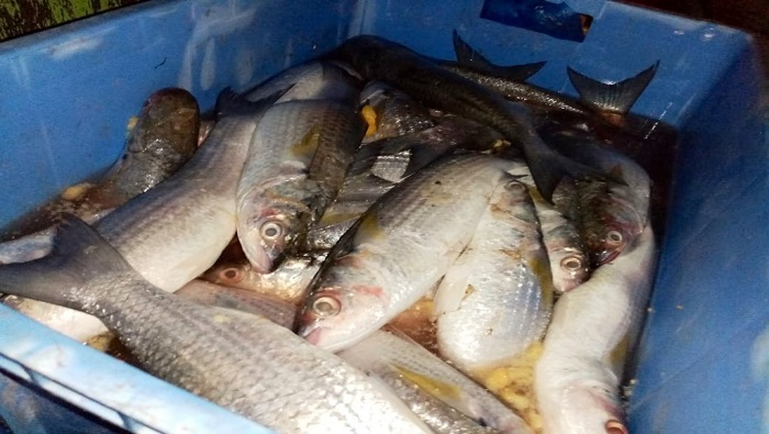 Unlicensed fish sellers' stocks seized in Oman