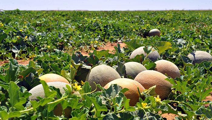 Al Najd farms in Dhofar enhance food security in Oman