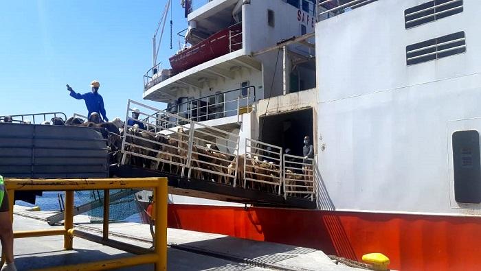 Sultan Qaboos Port in Oman receives livestock shipment