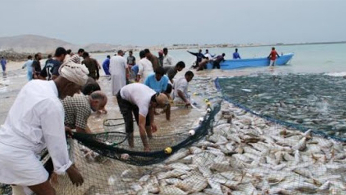 Fish catch in Oman declines by 14%
