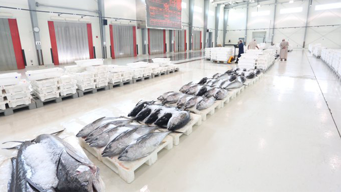 Fish catch in Oman rises by 19.4%