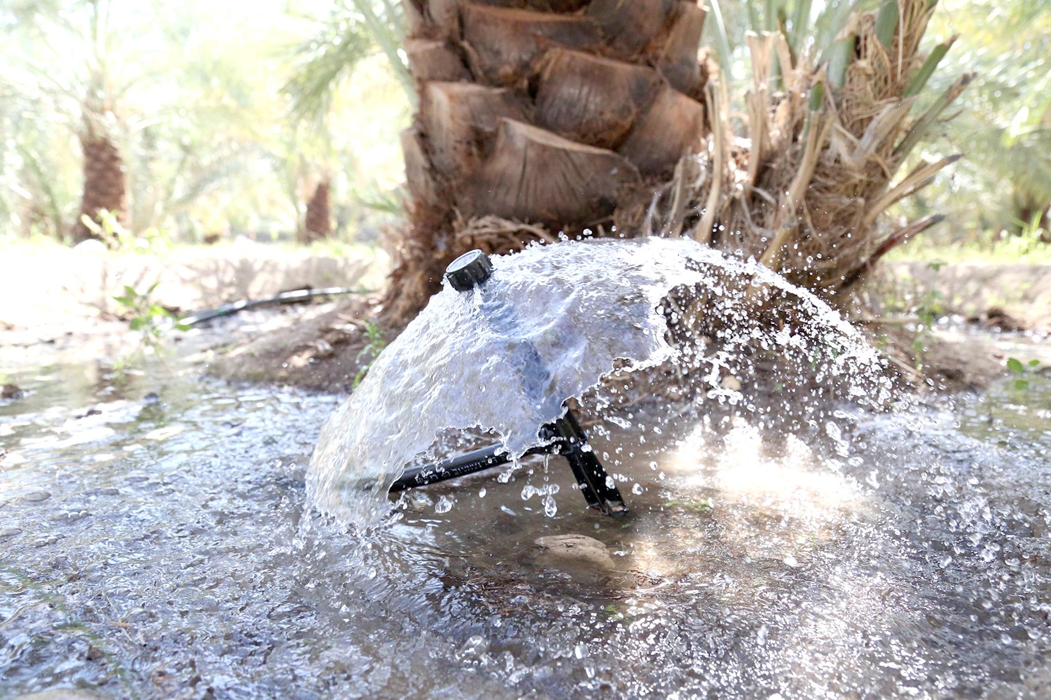 مياه مهدورة في مزارع السلطنة..إليكم طرق سقي النخيل