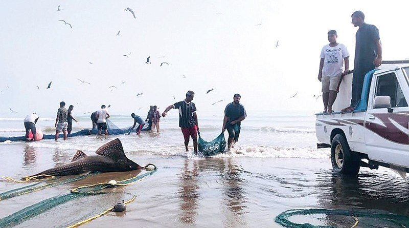 Fish catch in Oman rises by 24.2%