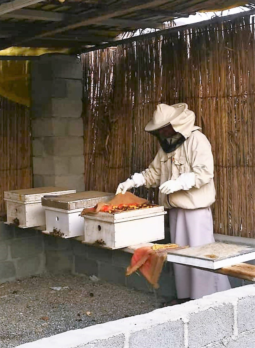 Efforts on to raise production of high quality, high nutritional value Omani honey