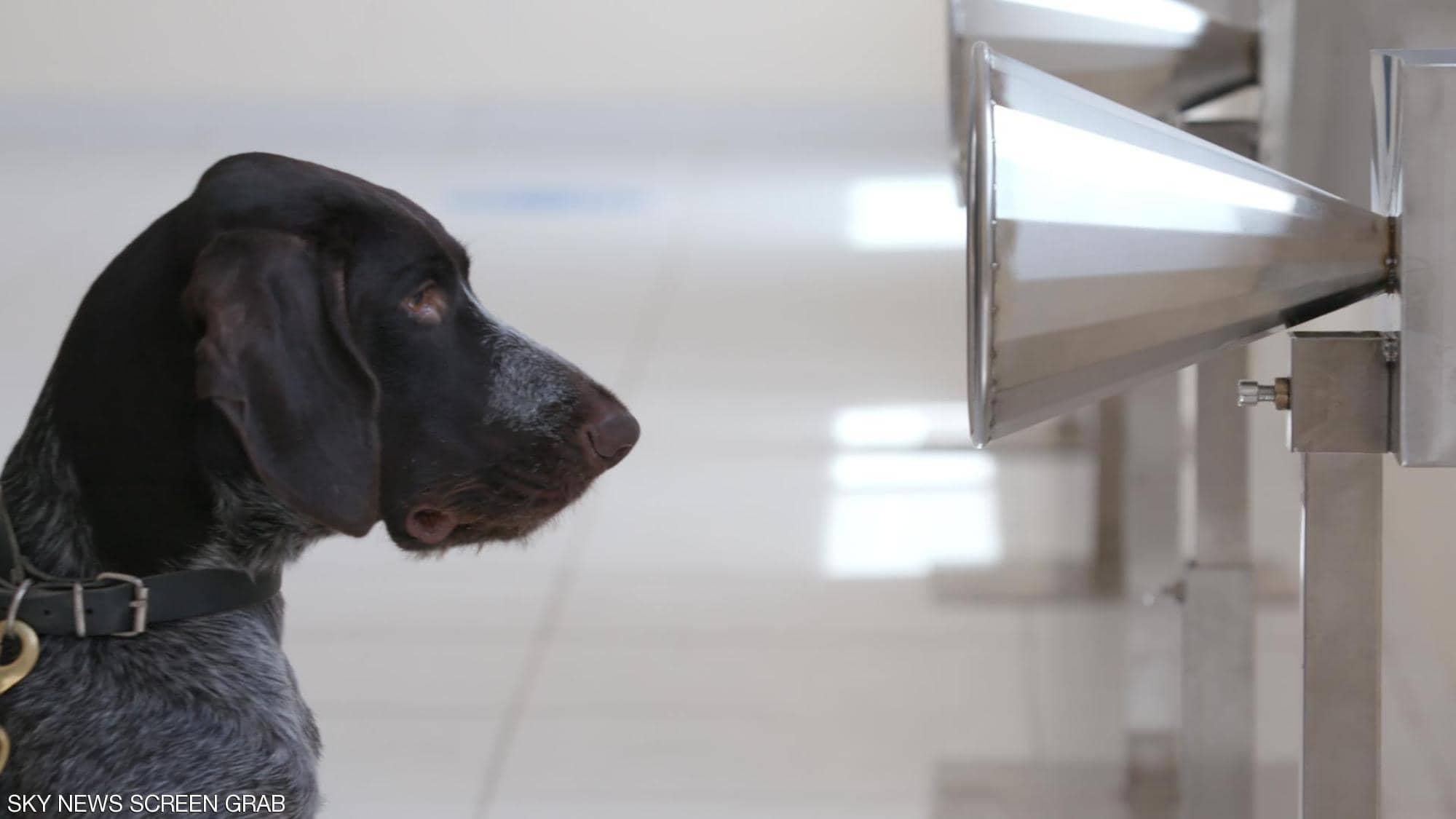 صور.. الإمارات تنجح في كشف كورونا باستخدام الكلاب البوليسية