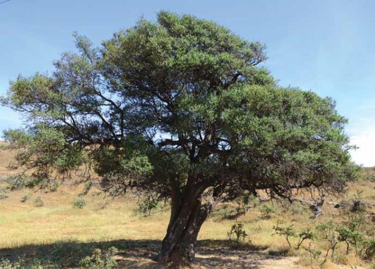 تدشين أول موقع لاستزراع الأشجار البرية ضمن مبادرة 10 ملايين شجرة