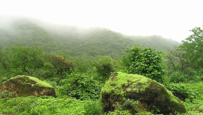 National team formed to study rainwater drainage in Dhofar