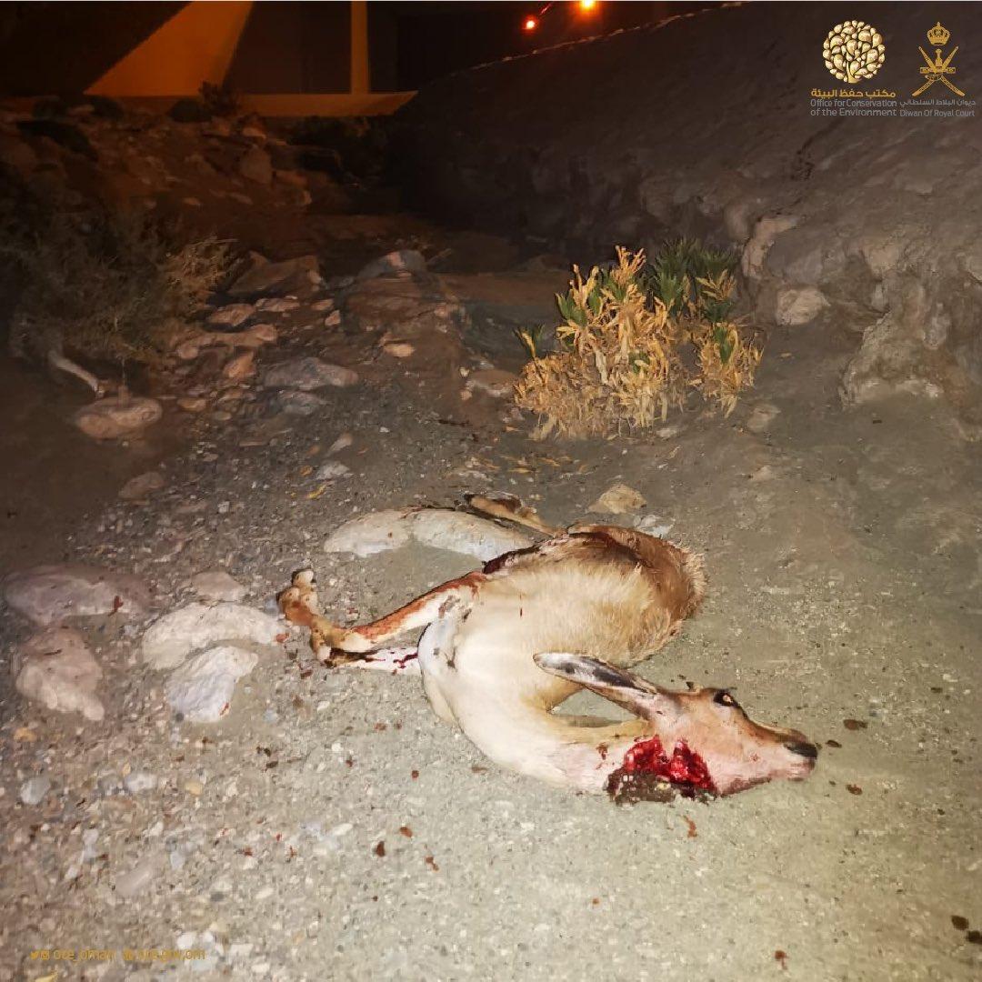 جنايات مسقط تدين متهمين بجناية قتل غزال