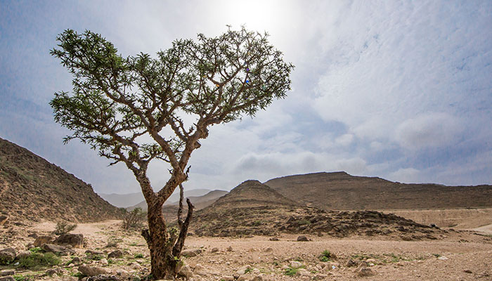 We Love Oman: The land of frankincense