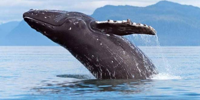 20 نوعًا من الحيتان والدلافين توجد في السلطنة