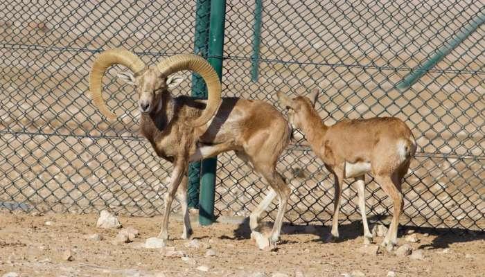 بالصور.. قائمة جديدة من الحيوانات المهددة بالانقراض بمحمية الوسطى