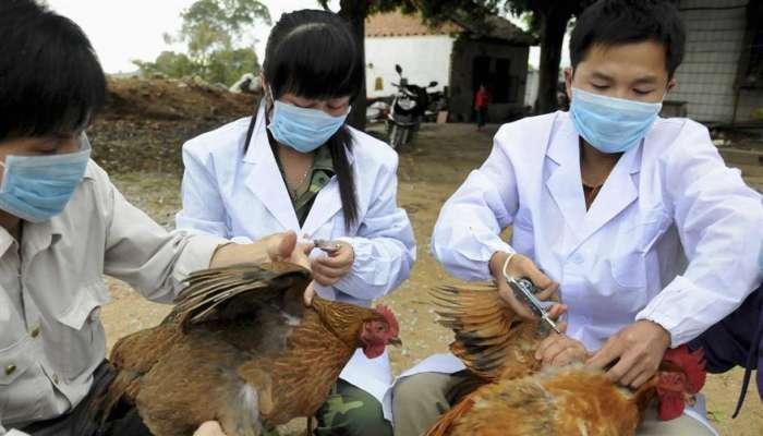 ظهور تفشٍّ جديدٍ لانفلونزا الطيور في محافظة شيغا اليابانية