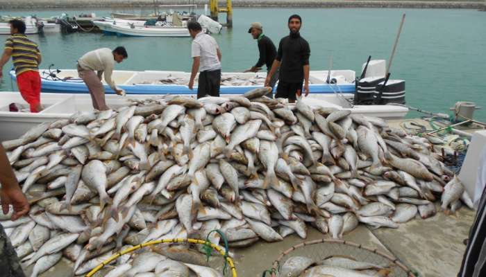 Over OMR 36 million worth of fish lands in Oman