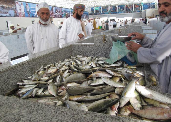 أكثر من 579 ألف طن إجمالي الأسماك المنزّلة بالسلطنة بنهاية أكتوبر 2020