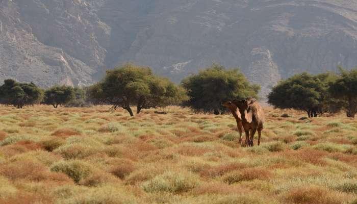 Northwesterly winds forecast over Oman