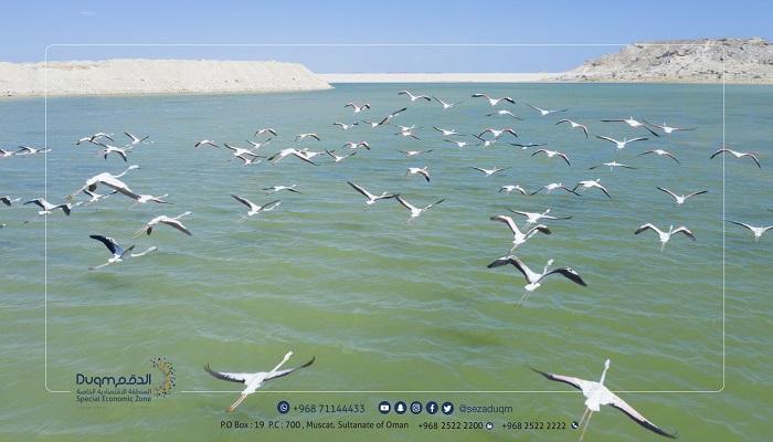 Migratory birds flock to Duqm's beaches