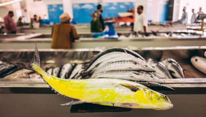 Over OMR 35 million worth of fish production in Oman