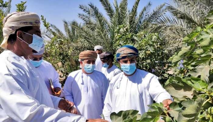 الزراعة تدشن مشروع زراعة  5000 شتلة من التين بمزرعة مواطن