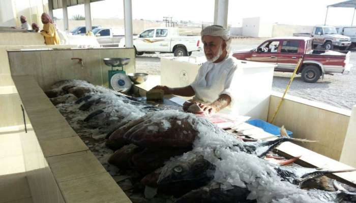 الثروة السمكية: تطوير مستمر لمنظومة التسويق السمكي في محافظات السلطنة