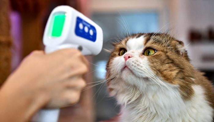 عاصمة كوريا الجنوبية تبدأ في اختبارات كورونا للحيوانات المنزلية