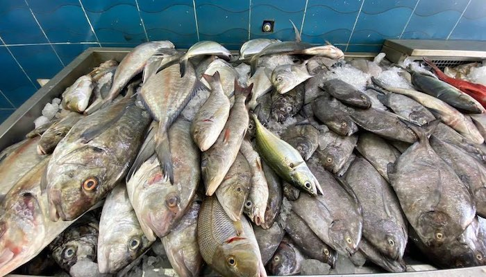 Over 700,000 tons of fish landed in Oman