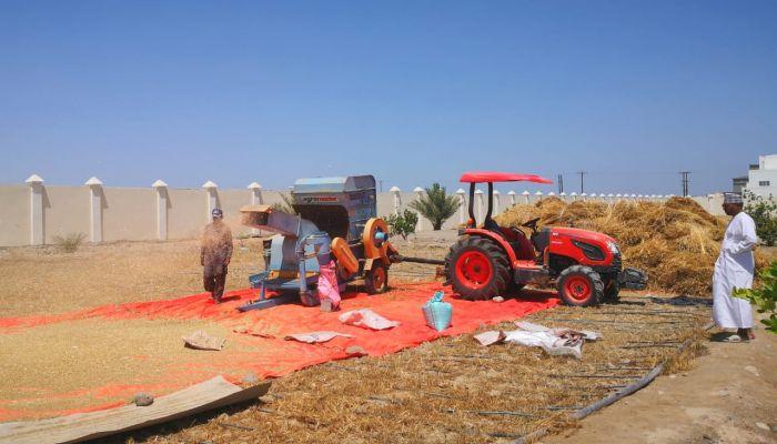 الانتهاء من حصاد محصول القمح بولاية السيب
