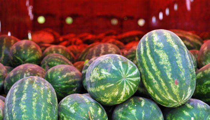 مزارع النجد في بادية ظفار تجود بمنتجاتها الزراعية في فصل الصيف