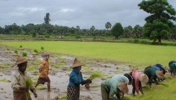 الفاو: مؤشر الغذاء العالمي يواصل ارتفاعه للشهر العاشر على التوالي