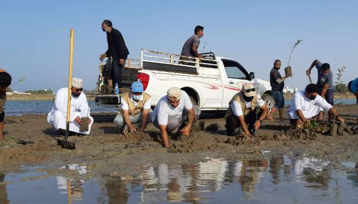 1,000 mangrove seedlings cultivated as part of campaign in Oman