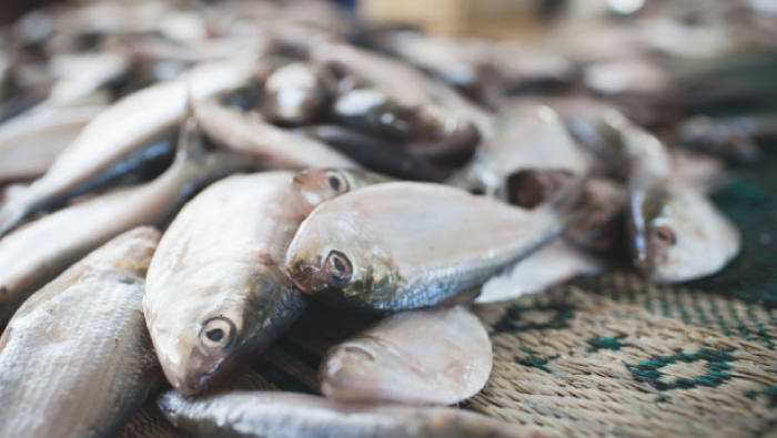 Ministry orders fishermen to carry valid license to fish in the evening in Oman