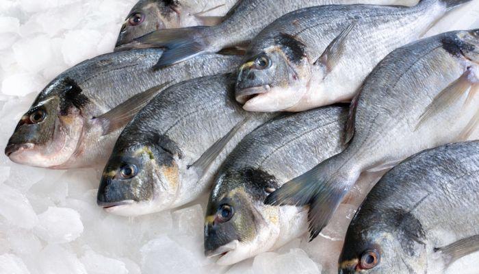 وزارة الزراعة: مستعدون لتوفير الأسماك خلال رمضان والصيف