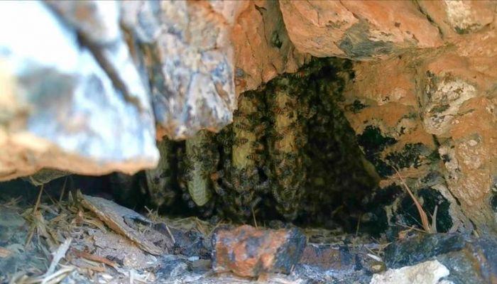تربية النحل وإنتاج العسل بولاية ضنك