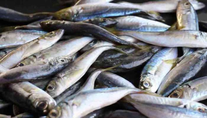 Oman records 31 percent increase in fish produce