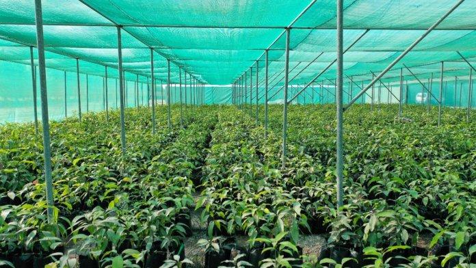 'الزراعة' تعلن عن مشروع لإنشاء حقول أشجار فاكهة نموذجية