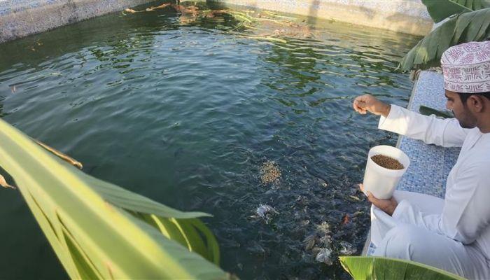 مواطن ينجح في زراعة أسماك 'البلطي'