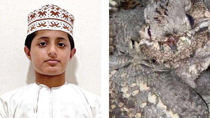 13-year-old Omani boy turns saviour for dying nightjar